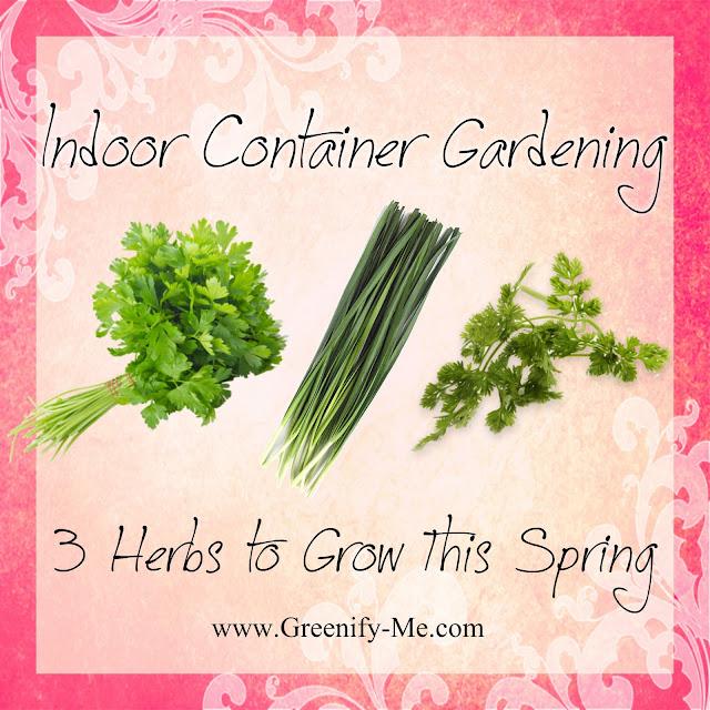 Indoor container garden spring herbs