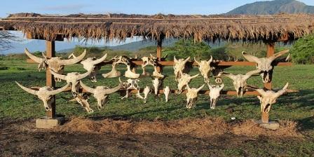 taman nasional baluran terdapat di taman nasional baluran tiket masuk taman nasional baluran untuk melindungi taman nasional baluran jatim