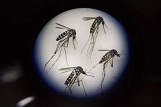 Zika, nombres de fundaciones internacionales, fundacion niños, fundaciones de niños,
