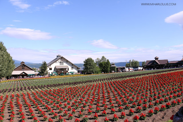 Furano Travel - Farm Tomita, Lavender Fields