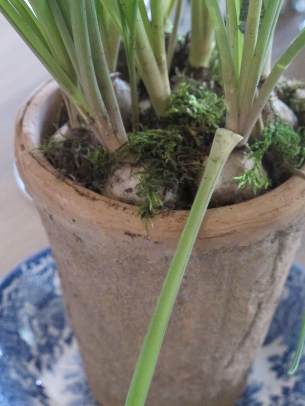 grønn glede plantebord