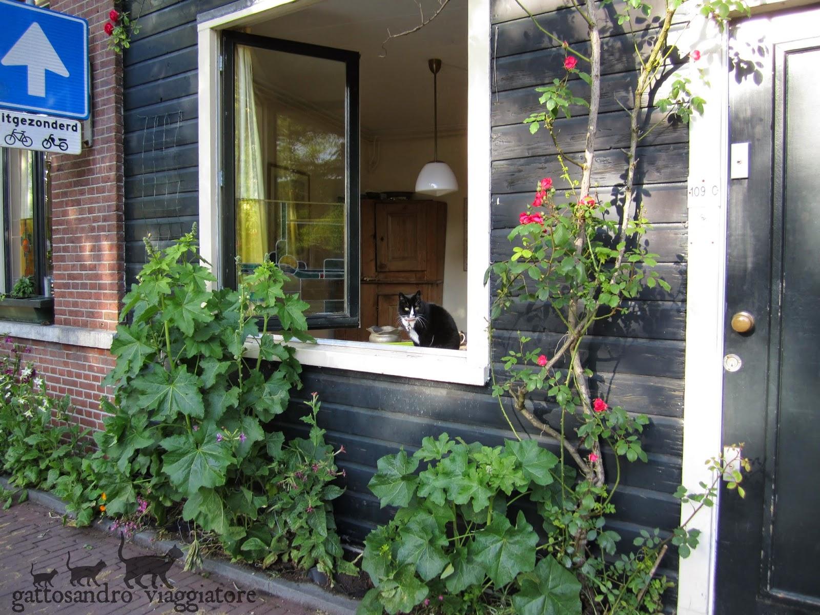 Gatto bianco e nero alla finestra