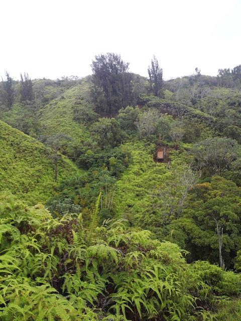 medleybyoanasinga.com-personal-blog-hawaii-vacation-kauai-island-off-road-adventure-princeville-ranch-8