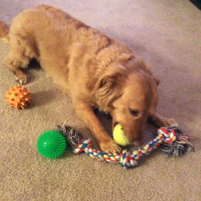dog playing with three toy balls and a rope The 3 Rs Blog