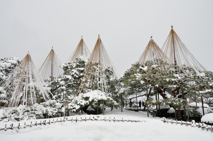 Yukitsuri, técnica japonesa para proteger los árboles del peso de la nieve