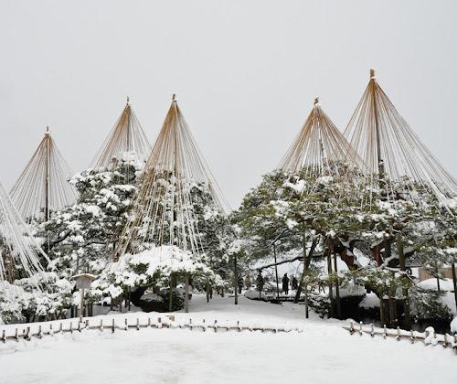 Yukitsuri  y otras técnicas japonesas para proteger los árboles en invierno, especialmente del peso de la nieve