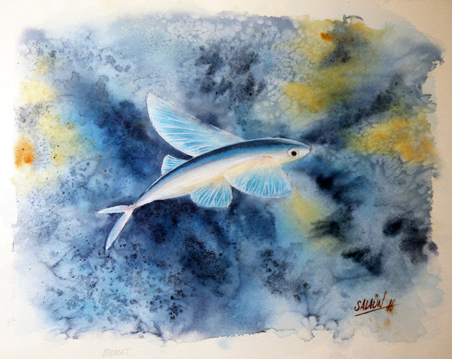 Aquarelle, poisson volant, exocet