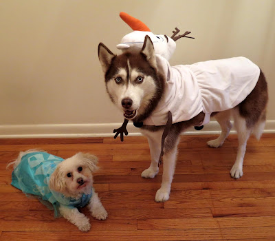 I couldn't help picking out my dogs' Halloween costumes early, they just look so cute!