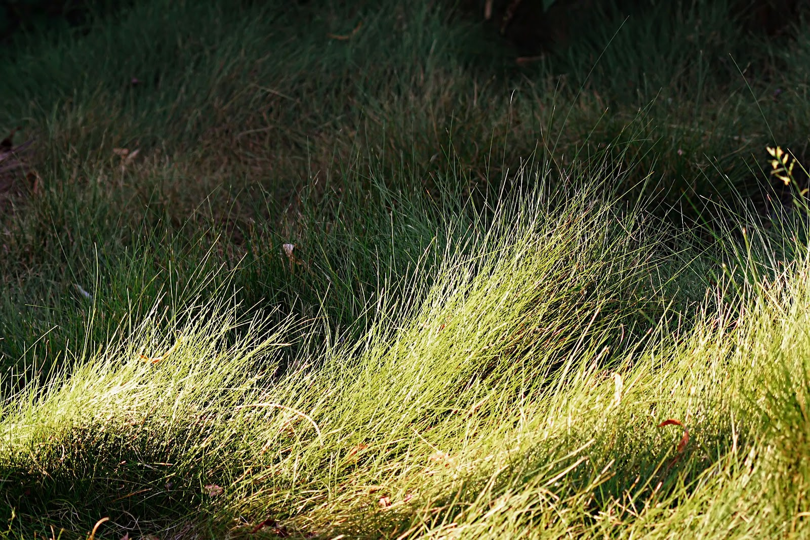 natural wood meadow grass - photo #3