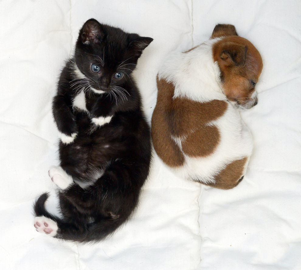 Abandoned Puppy And Kitten Become Best Friends (12 Pics