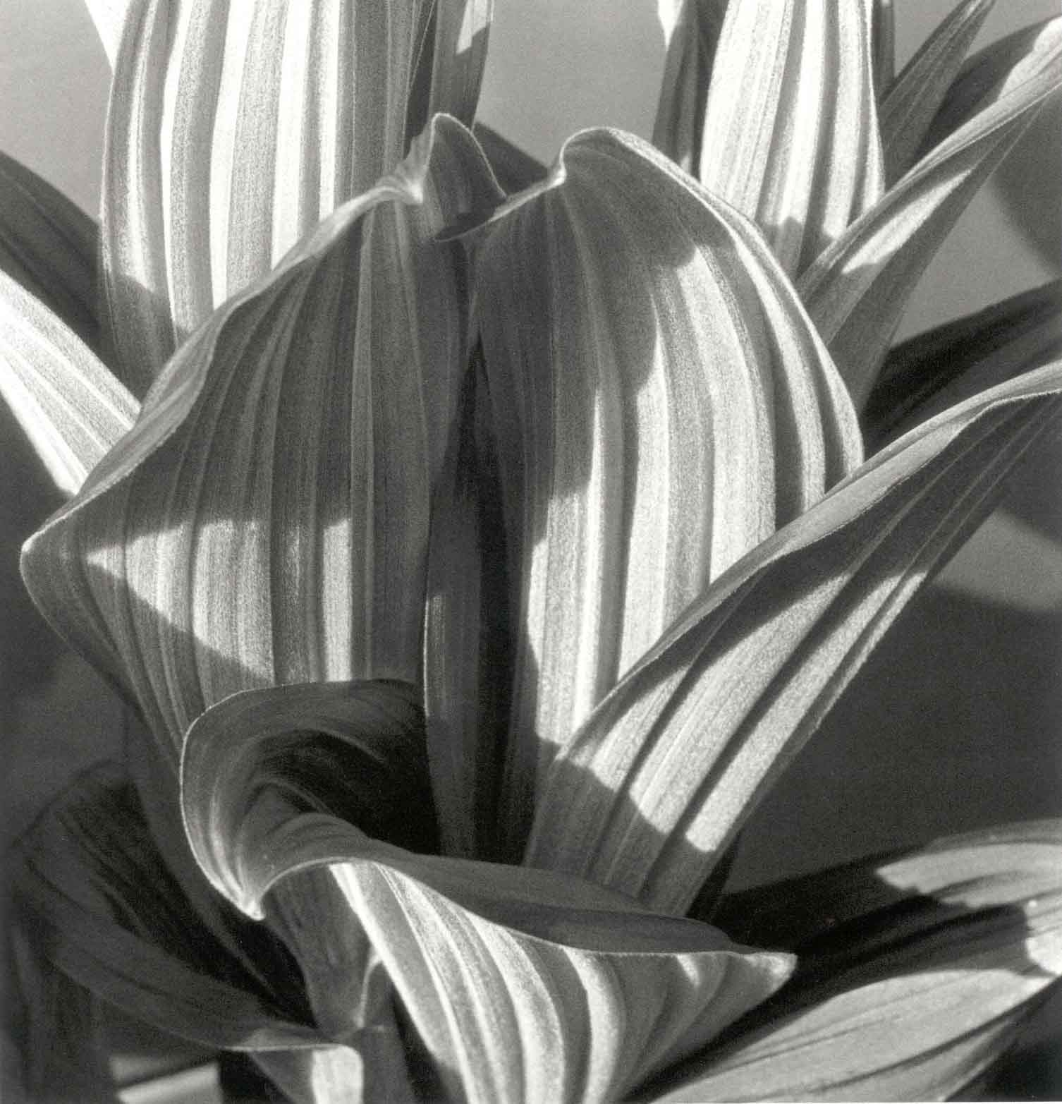 History in Photos Imogen Cunningham