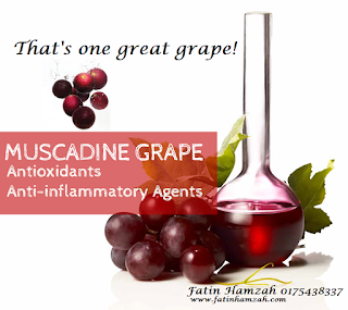 muscadine-grape