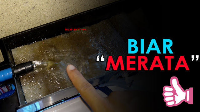 Tips Agar Air Aquarium Merata di Filter Fisik Japmate Air Aquarium Makin Jernih