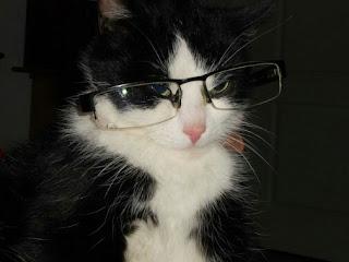Nama Untuk Kucing Paling Bagus