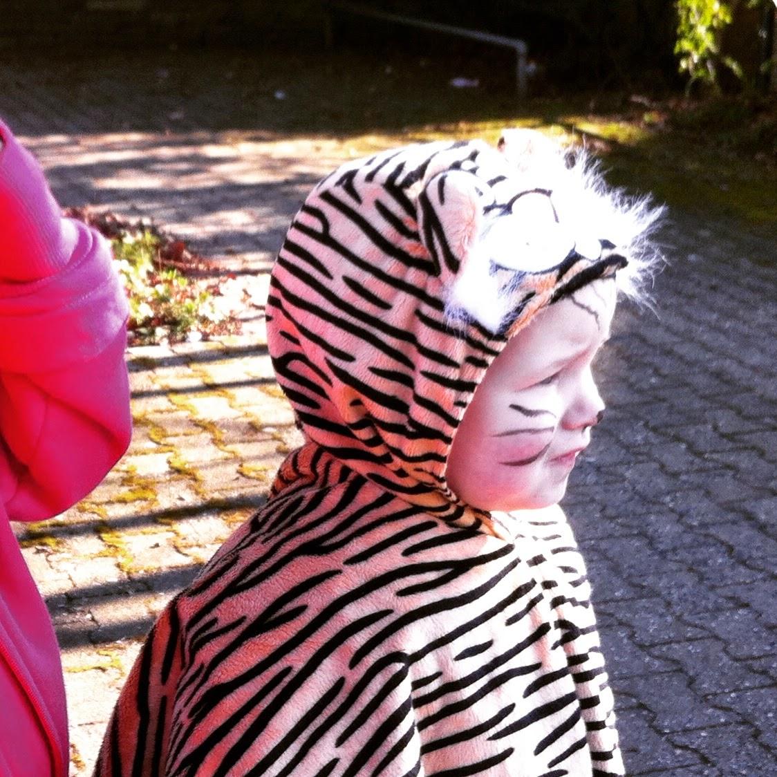 Wutz im Tiger-Kostüm