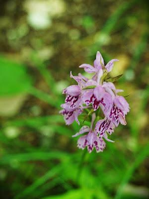 Parco Nazionale Monti Sibillini Estate fiori