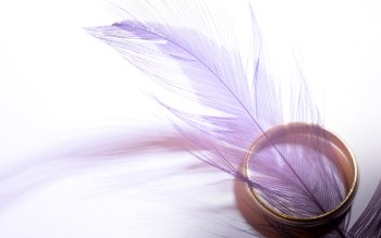 Wallpaper: Purple Feather and Gold Ring