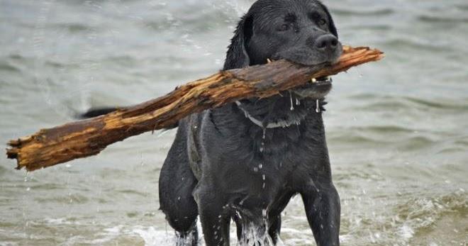Все о братьях наших меньших: Опасна ли для собак игра с ...
