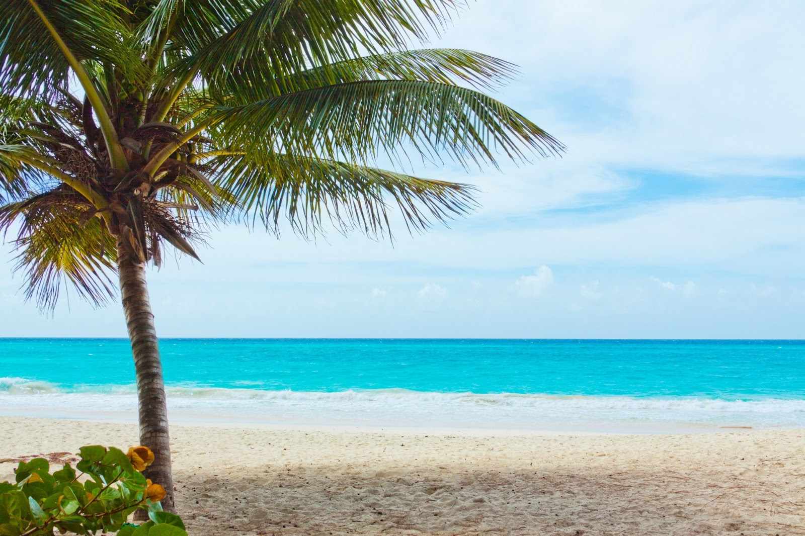 pippi 39 s blog pictures of palm trees on the beach. Black Bedroom Furniture Sets. Home Design Ideas