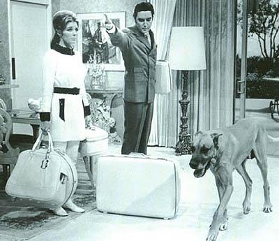 Las Mascotas de Elvis Presley
