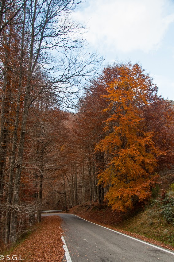 Carretera en la selva de Irati. Navarra. Hoy compartimos-Calles, caminos y carreteras