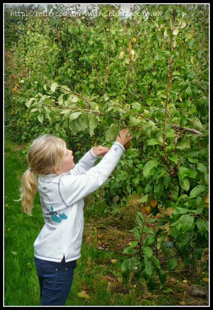 Blackmoor Estate pick your own day
