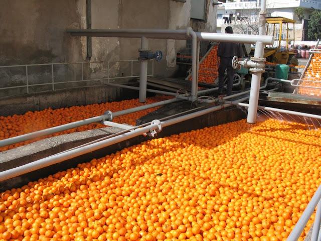 Μεταποιητικές επιχειρήσεις της Αργολίδας στο καθεστώς της συνδεδεμένης ενίσχυσης χυμοποίησης πορτοκαλιών το 2018