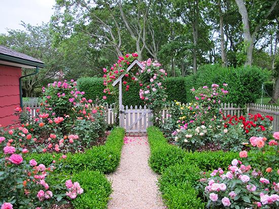 contoh taman rumah dengan taman penuh bunga
