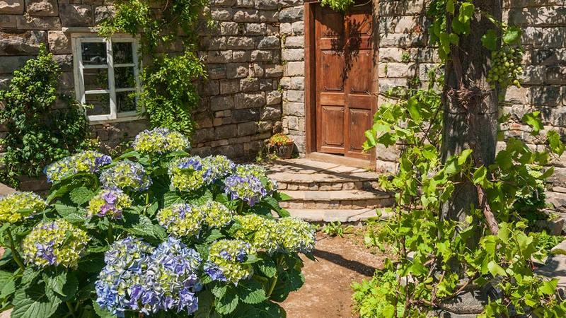 Hortensias. The Pazo's Secret Garden. Rose McMonigall. RHS Hampton Court Flower Show 2017