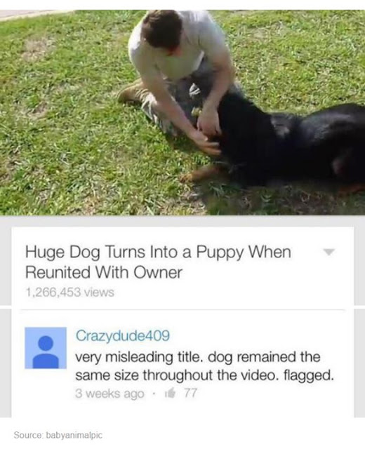 A comment about a misleading video of a huge dog