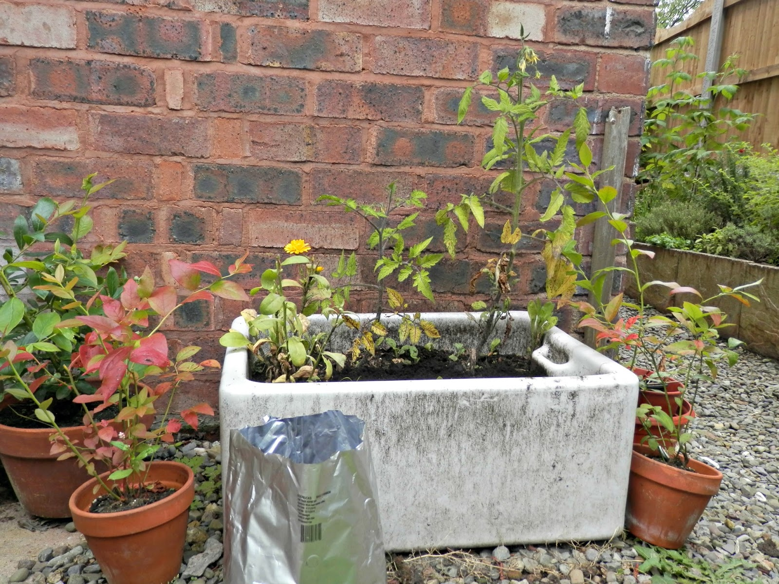 Second hand susie 3 ways to use used coffee grounds in the garden Coffee grounds for garden