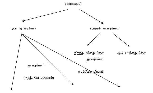 TRB-ZOOLOGY-hierarchical-roots