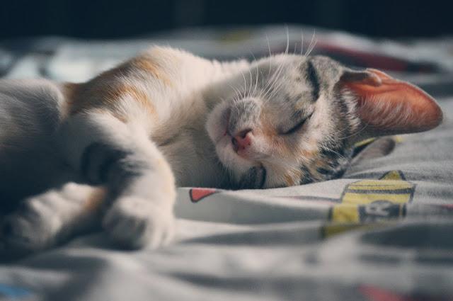 صور قطط جميلة جدا تخطف الأنظار