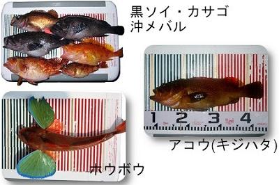 舞鶴 ノマセ釣り 根魚 関西の船釣りで釣れる 竿とリール
