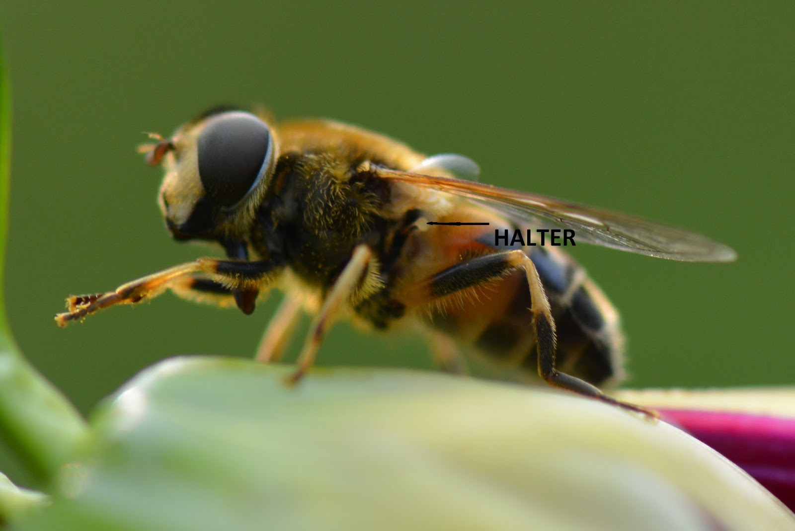 Picture of a bee halter.