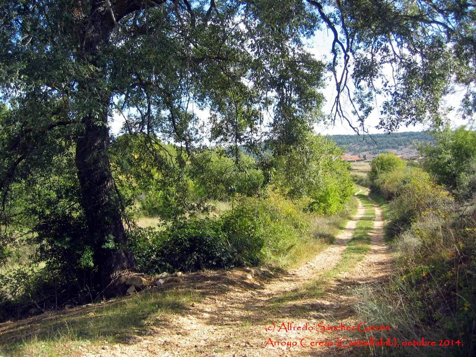 arroyo-cerezo-quercus-camino