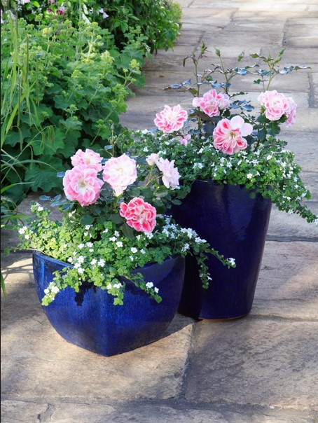 Flower Gardening Suggestions and Ideas