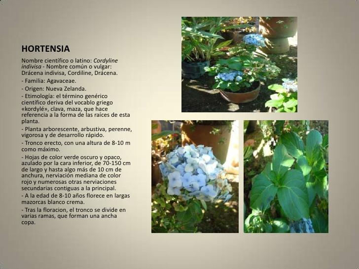 Mi remanso de paz c mo cuidar de una planta delicada - Cuando podar hortensias ...
