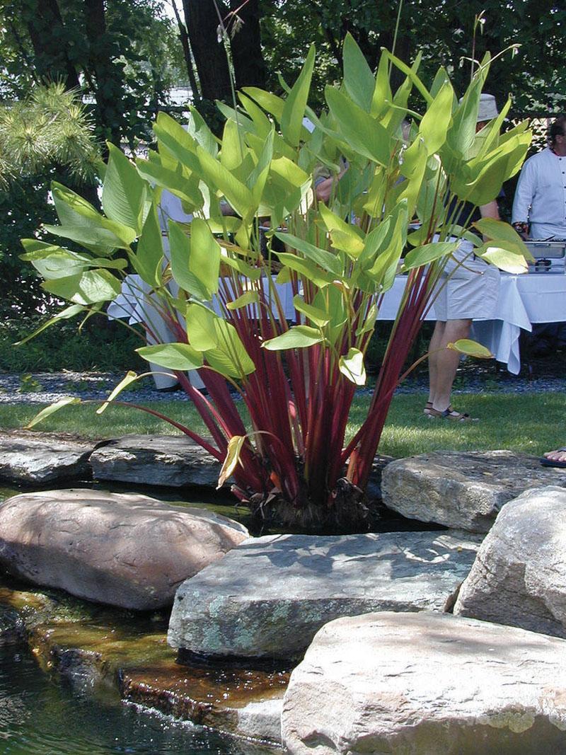 Garden Bush: Aquascape Your Landscape: Amazing Water Plants