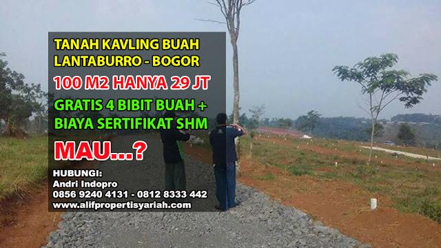 Tanah dijual di Bogor - Kavling Buah Lantaburro Karya Mekar