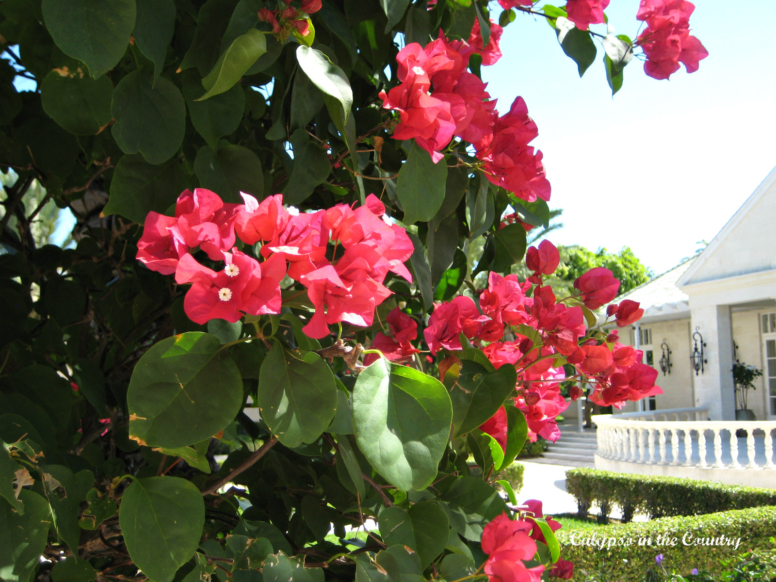 Flowers in the Caribbean