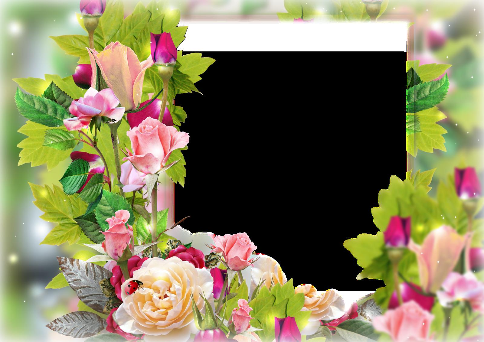 фото цветы для оформления открыток и поздравлений