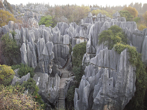 bosque de piedra china