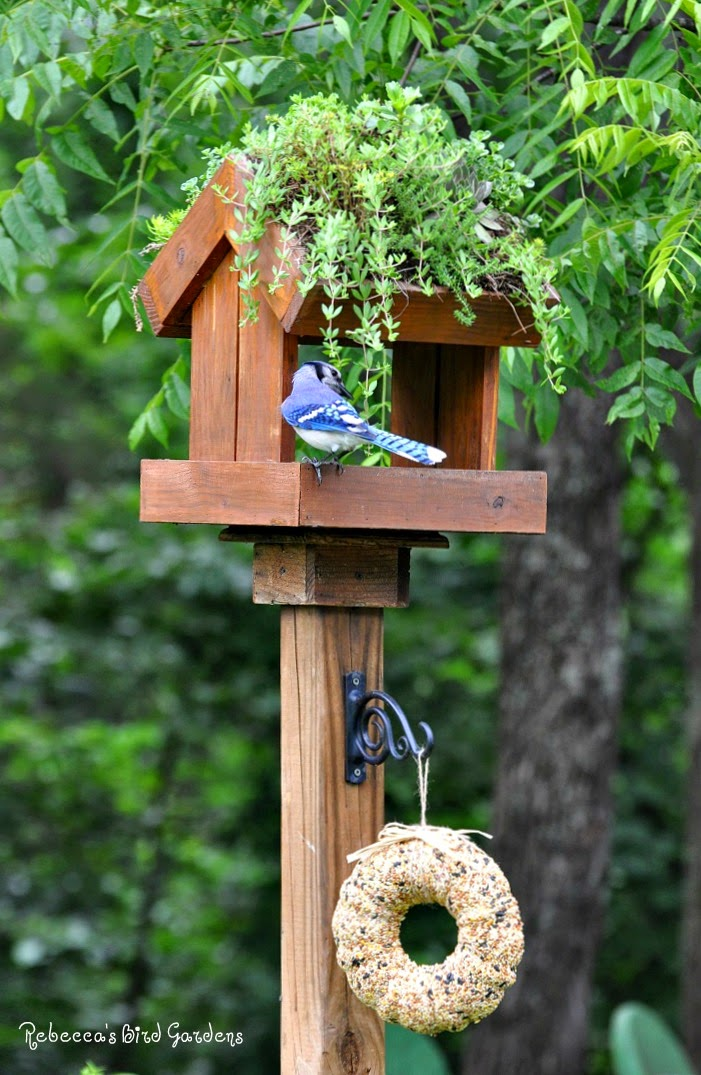 Rebecca's Bird Gardens: Products And Photos