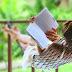 Tag du Lecteur en vacances!