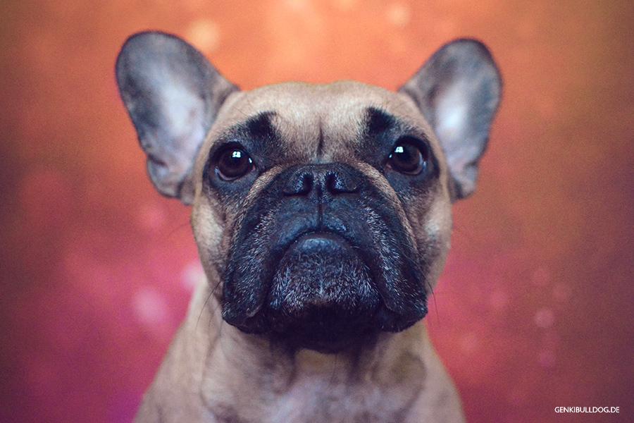 Allergietagebuch Hund
