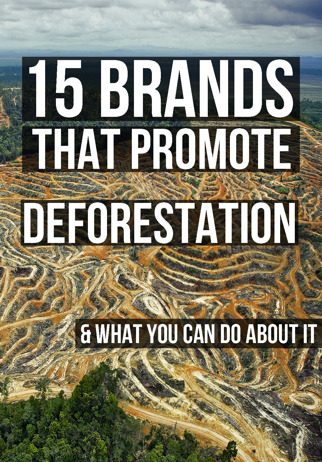 deforestation, ethical fashion, ralph laurent, forever 21, michael kors deforestation, boycott ralph lauren