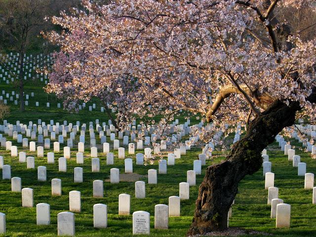 Ver o Cemitério de Arlington em Washington