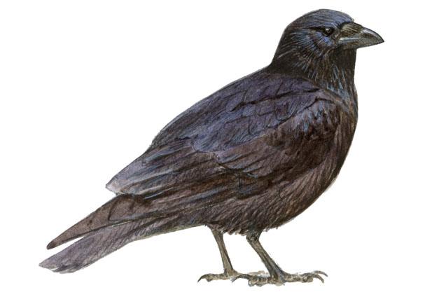 Vamonos A Paseo: En Blanco Y Negro. Las Aves De La Foz De