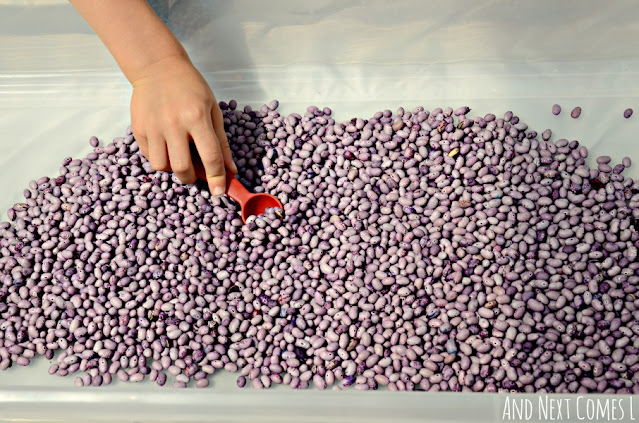 Sensory bin beans that are lavender scented